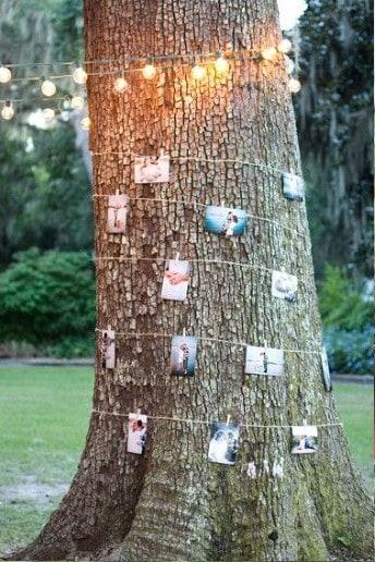 photo_tree_crop2