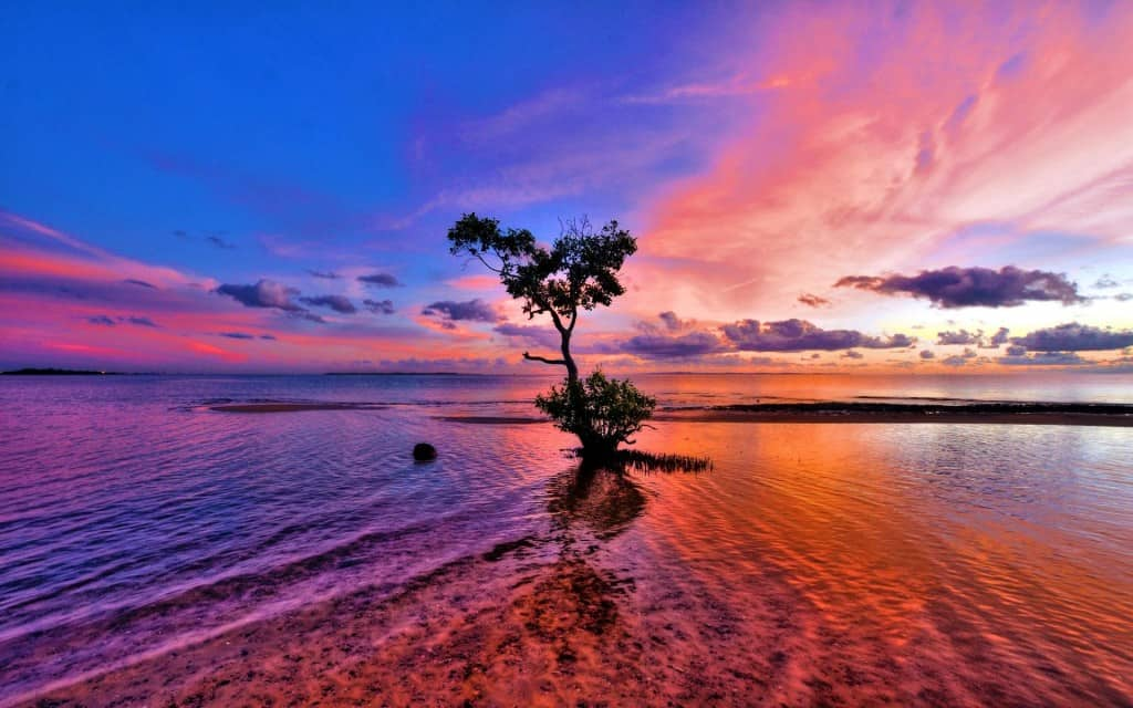 pink-sunset-lonely-tree-nature-1920x1200