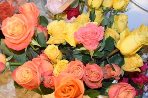 Orange Peach Yellow Roses