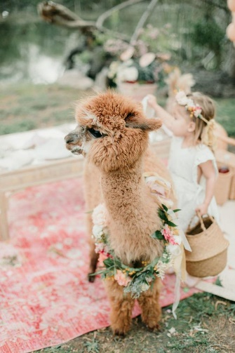 Alpaca and flower girl