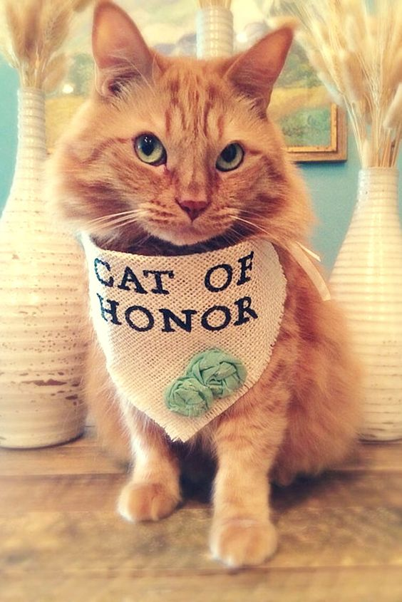"Cat with a ""Cat of Honor"" scarf"